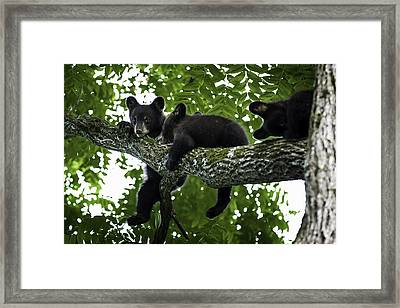 Hanging Around Framed Print by Sara Hudock