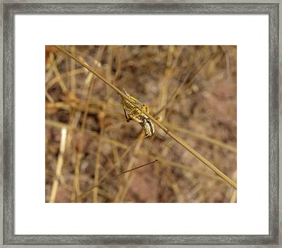 Hanging Around Framed Print by Sarah Crites