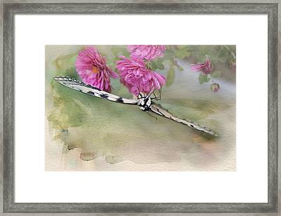 Hanging Around Upside Down Framed Print by Kathleen Holley