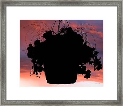 Hanging Basket Silhouette Framed Print by Will Borden