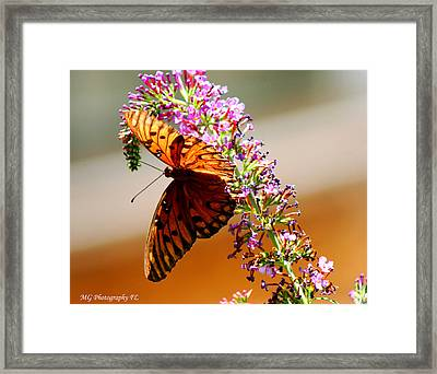 Hanging Butterfly Framed Print by Marty Gayler