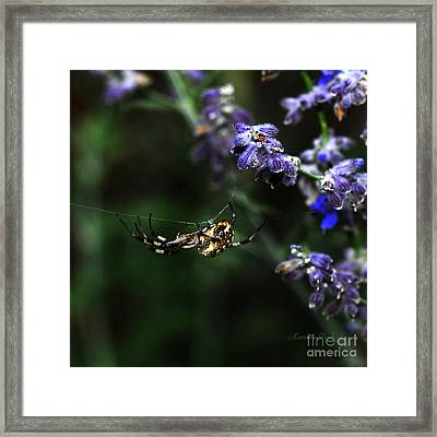 Framed Print featuring the photograph Hanging By A Thread by Karen Slagle