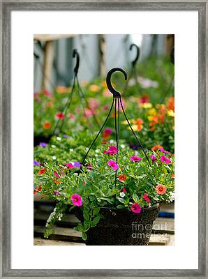 Hanging Flower Baskets Shallow Dof Framed Print by Amy Cicconi