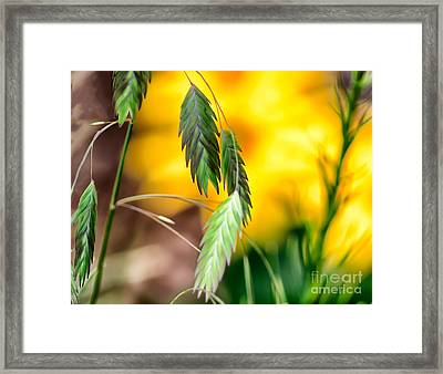 Framed Print featuring the photograph Hanging In by JRP Photography