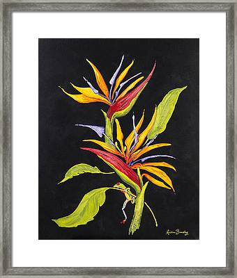 Hanging In Paradise Framed Print by Nickie Bradley