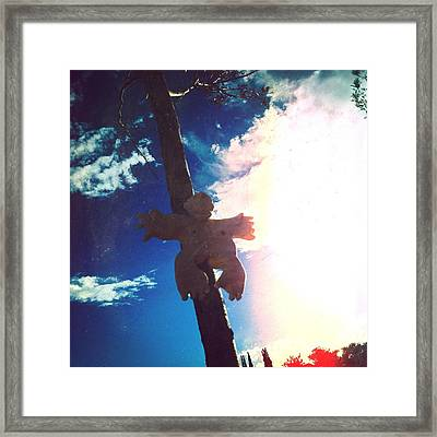 Hanging In The Sun  Framed Print by Mark M  Mellon