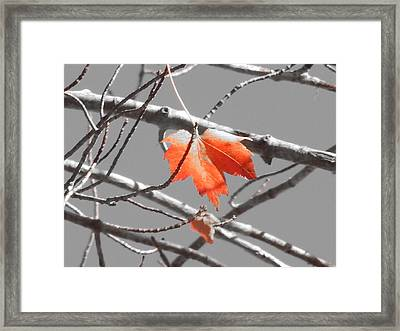 Hanging In There Framed Print by Timothy Caron
