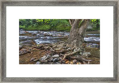 Hanging In There Framed Print by Wendell Thompson