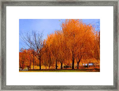 Hanging Leaves Framed Print by Sarai Rachel