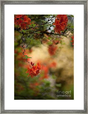 Hanging  Framed Print by Mike Reid