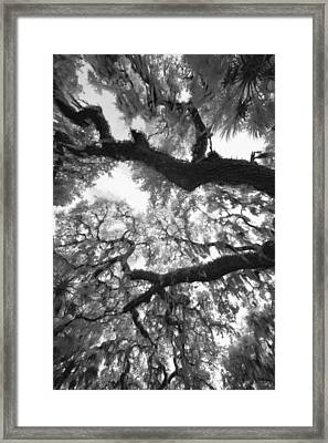 Hanging Moss Framed Print by Bradley R Youngberg