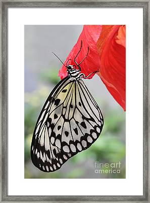 Framed Print featuring the photograph Hanging On #2 by Judy Whitton