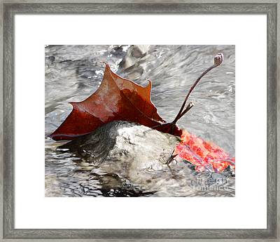 Framed Print featuring the photograph Hanging On By Faith by Anita Oakley