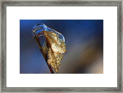 Framed Print featuring the photograph The Last Leaf  by Debbie Oppermann