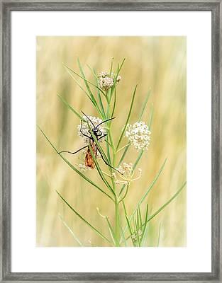 Hanging On Framed Print by Debra Martz