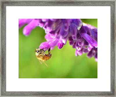 Framed Print featuring the photograph Hanging On For Dear Life by Debby Pueschel