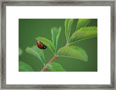 Framed Print featuring the photograph Hanging On by Ken Dietz