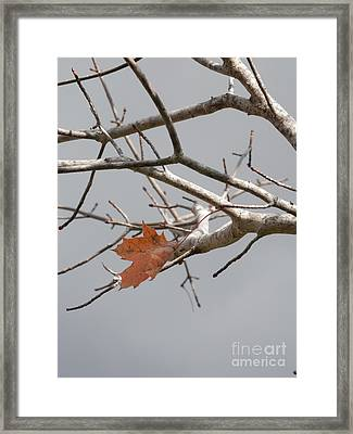 Hanging On Framed Print by Margaret McDermott