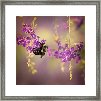 Hanging On Framed Print by Maria Robinson