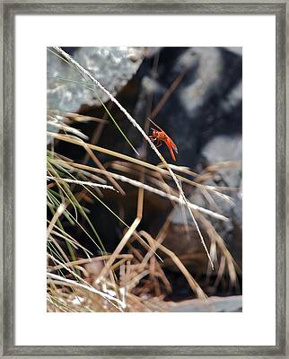 Framed Print featuring the photograph Hanging On by Michele Myers