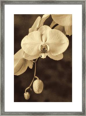 Hanging Orchid Framed Print by Garry Gay