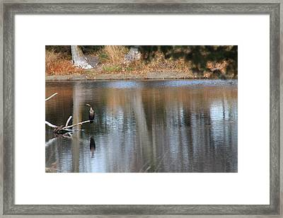 Framed Print featuring the photograph Hanging Out by Alicia Knust