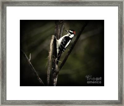 Hanging Out Framed Print by Cris Hayes