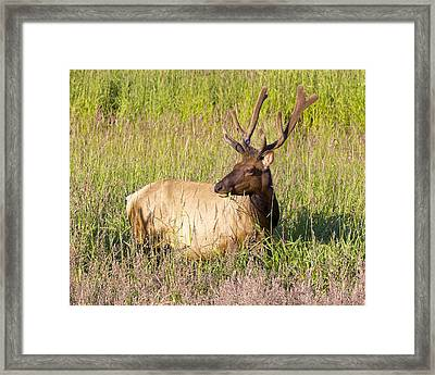 Framed Print featuring the photograph Hanging Out In The Meadow by Todd Kreuter