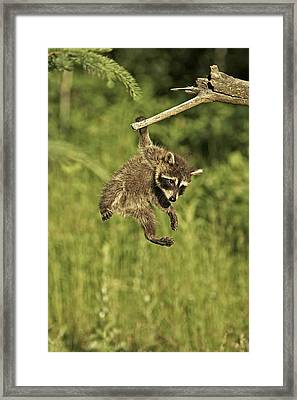 Hanging Out Framed Print by Jack Milchanowski