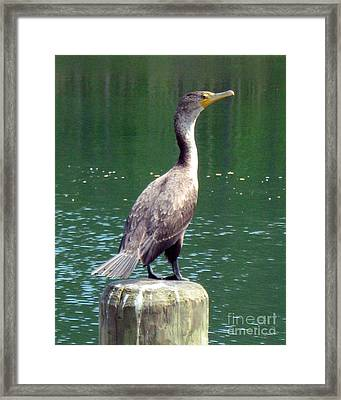 Framed Print featuring the photograph Hanging Out Lakeside by Wendy Coulson