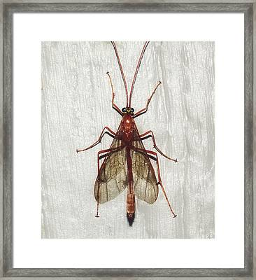 Hanging Out Framed Print by Melanie Lankford Photography
