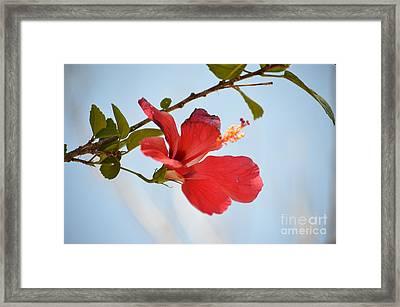 Hanging Out Framed Print by Pamela Shearer