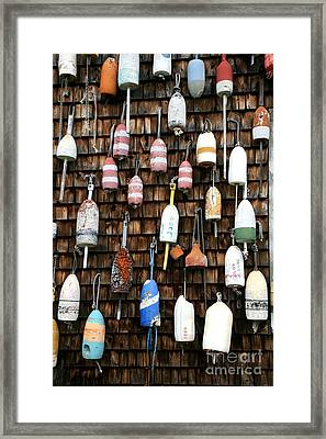 Hanging Out Framed Print by Timothy Johnson