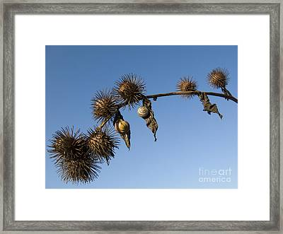 Hanging Out Together Framed Print by Elizabeth Debenham