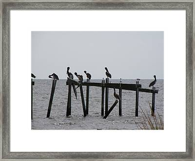 Framed Print featuring the photograph Hanging Out With Friends by Beth Vincent