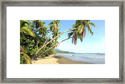 Hanging Palm Trees Framed Print by Tropigallery -