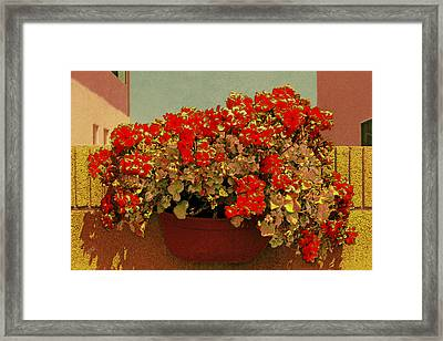Hanging Pot With Geranium Framed Print
