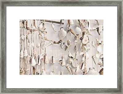 Hanging Shells Framed Print by Tom Gowanlock