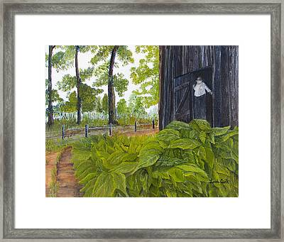 Hanging Tobacco Framed Print