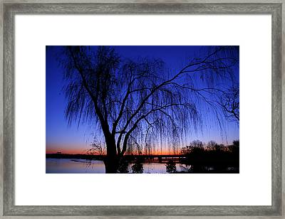 Hanging Tree Sunrise Framed Print by Metro DC Photography