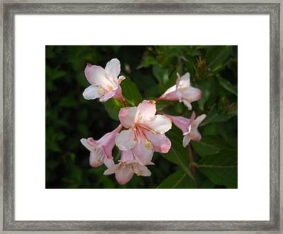 Framed Print featuring the photograph Hanging With Friends by Yolanda Raker