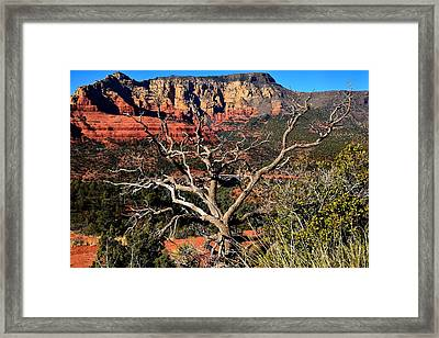 Hangover Trail Framed Print