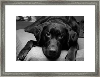 Hank Framed Print by Meaghan Troup