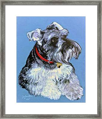 Hans The Schnauzer Original Painting Forsale Framed Print by Bob and Nadine Johnston