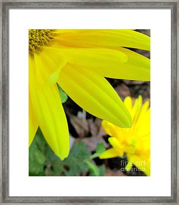 Happenstance #3 Lower Right Framed Print by Nancy Rucker