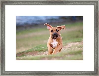Happiness Framed Print by Charlie Photographer
