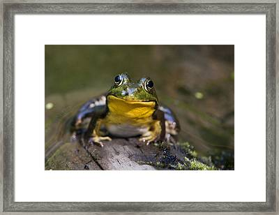 Happiness Frog Framed Print by Christina Rollo