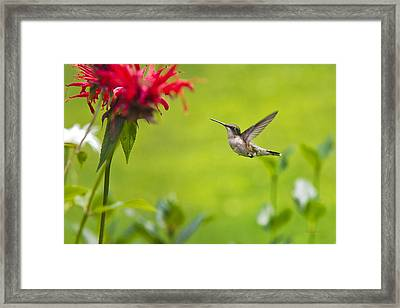 Happiness Hummingbird Garden Framed Print