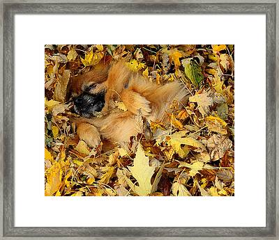 Happiness Is A Fresh Pile Of Leaves Framed Print by Joe Wicks