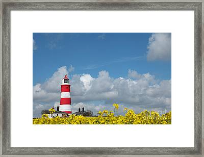 Happisburgh Lighthouse With Oil Seed Rape In Flower Framed Print by Paul Lilley